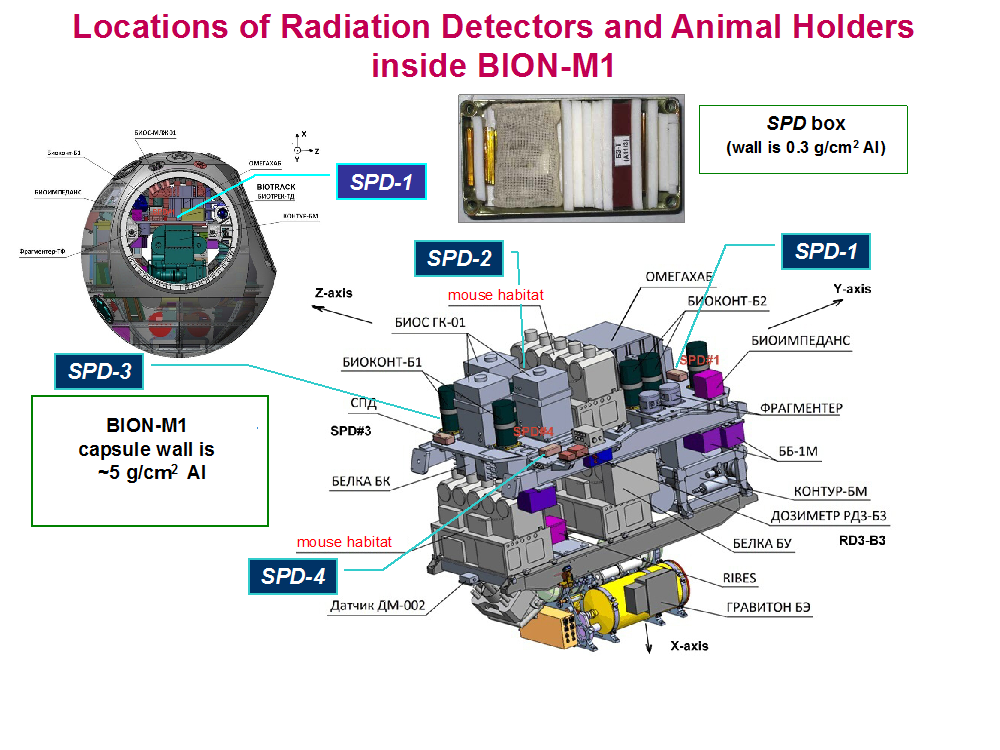 locations of Radiation Detectors and Animal Holders inside BION-M1